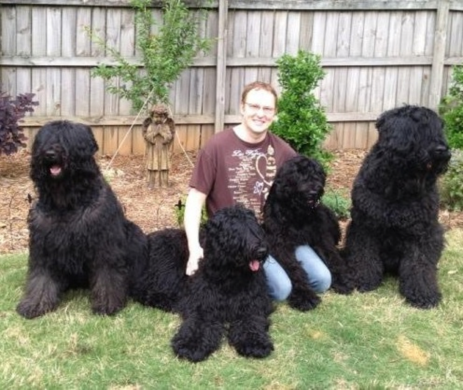 Over The Moon Black Russian Terriers Otm News